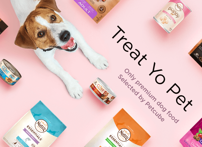 Petcube.com curates food